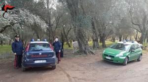 Intensificazione dei controlli dei Carabinieri del gruppo di Gioia Tauro (Rc) a cavallo del fine settimana: un arresto e diverse denunce.