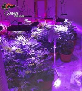 Reggio Calabria. Occupa un appartamento e all'interno coltiva 110 piante di marijuana.