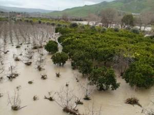 Bronte (Ct) chiede fondi per proteggere i frutteti dalle alluvioni del simeto