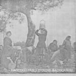 9-raccoglitrici-di-olive-a-badolato-anni-40-e-50