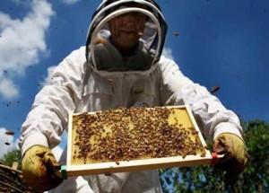 10-apicoltore