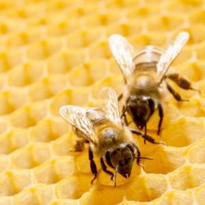 3-api-in-alveare