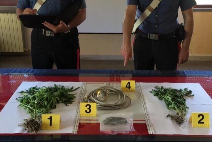 Stalett (Cz). Coltivava marijuana a domicilio: arrestato 31enne