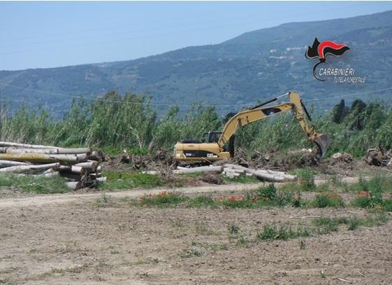 Lamezia Terme (Cz). Taglio pioppeto in zona con vincolo paesagistico.