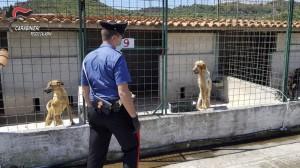 Sant'Ilario dello Jonio (Rc). I carabinieri sequestrano un canile irregolare