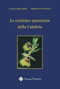 11-orchidee-di-calabria