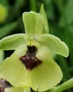 19-orchidea-finale