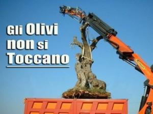 6-gli-olivi-non-si-toccano