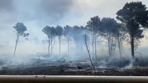 incendio-al-bosco-del-magaggiaro