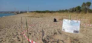 Quattro nuovi nidi di tartaruga marina in Sicilia e Calabria. Du'09ea a Guardavalle (Cz)