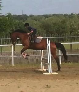 Crosia (Cs). Equitazione, Nicolò Milieni (9 anni) primo posto al concorso Mipaf