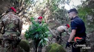 Bianco (Rc). Carabinieri: droga a San Luca. I carabinieri scoprono altre due piantagioni.