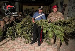 Gioia Tauro (Rc). Ancora arresti per produzione di stupefacente 900.000 euro sottratti alla criminalità. Sequestrato un essiccatoio