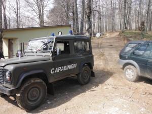 Bagaladi (RC). Una squadra di 5 persone, attrezzata di camion con rimorchio e trattore, sorpresa a razziare piante di leccio in un bosco privato. Arrestati.