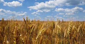 Sicilia. Piano di sviluppo rurale, in arrivo altri 660 milioni per agricoltori.