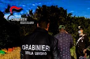 Gioia Tauro (Rc). Altro duro colpo al caporalato: 3 denunciati e fino a 53.000 euro di sanzioni elevate dai carabinieri