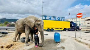 elefante-circo-orfei