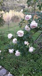fioritura-autunnale