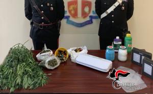 gioiosa-jonica-lodore-di-marijuana-attira-i-carabinieri-2